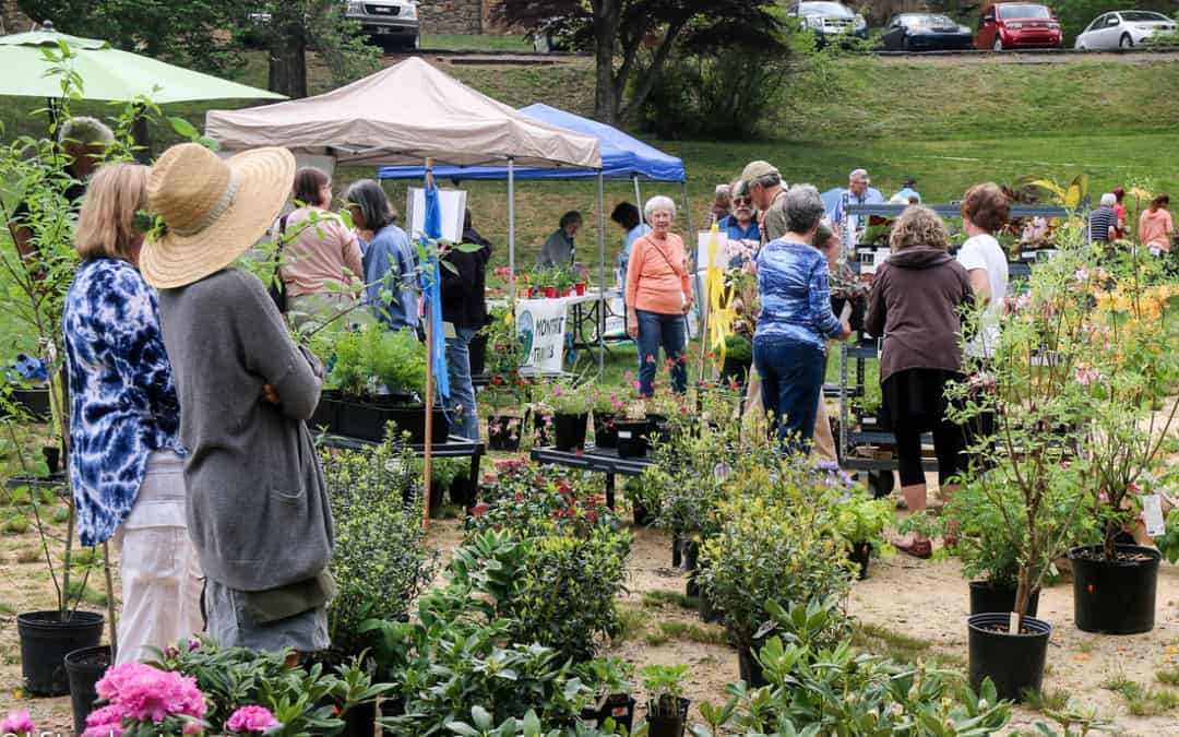 Montreat Native Plant Sale and Arbor Day Celebration is more than a Sale
