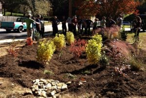 Montreat Native Plant Sale will Feature Creeks and Stormwater